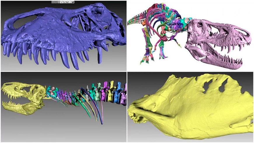 3D печать скелета тираннозавра